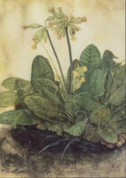 Schlüsselblume (Primula veris), 1503/05