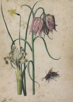 Iris, Narzisse, Schachbrettblume und Hornisse. Iris, Narcissus, Checkered Lily and Hornet. Iris, narcisse, fleur en echiquier et frelon.