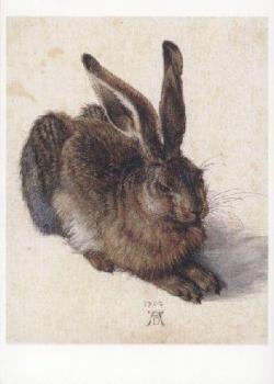 Feldhase. Field Hare. Lievre, 1502