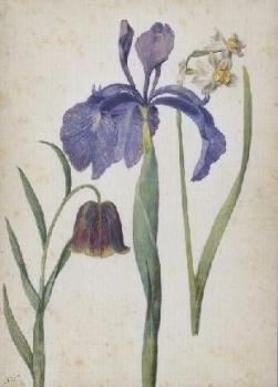Iris, Narzisse, Fritillaria. Iris, Narcissus, Fritillaria. Iris, Narcisse, Fritillaria.
