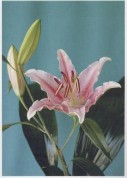 Blumen #12, 2007