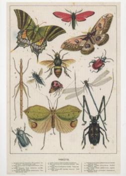Insekten - Insects. Illustration aus Cassell's Natural History, 1884.