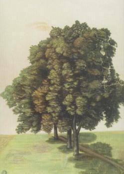 Drei Lindenbäume auf einer Wiese, 1494