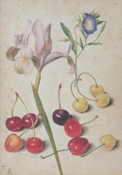 Kirschen, Iris, Winde